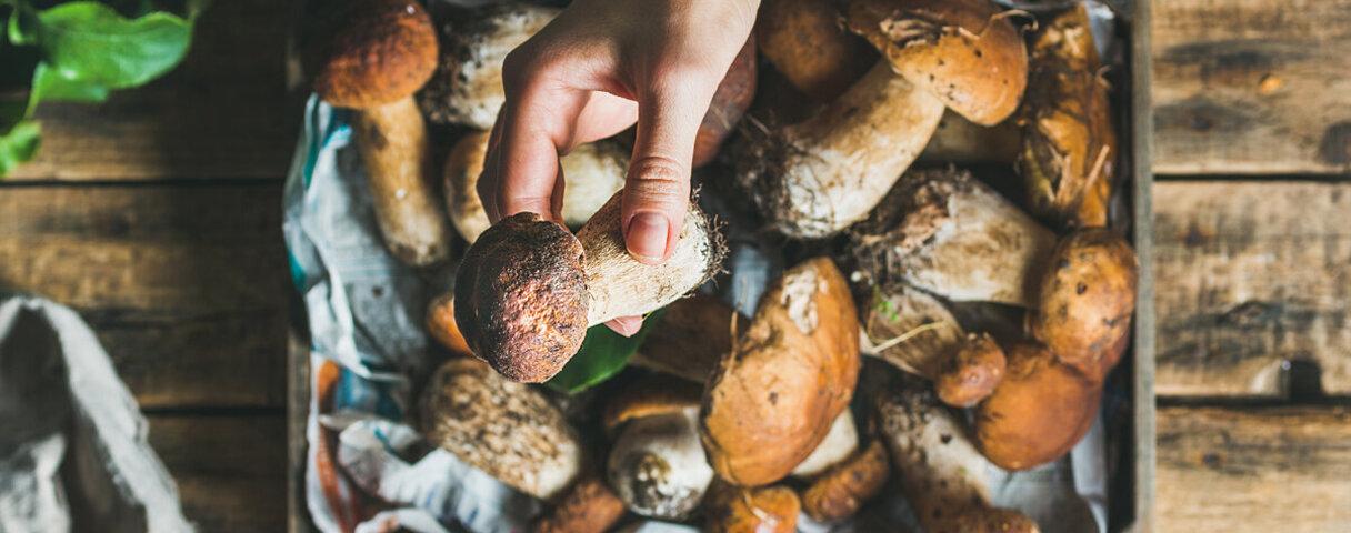 Selbst gezüchtete Pilze liegen in einer Schale.