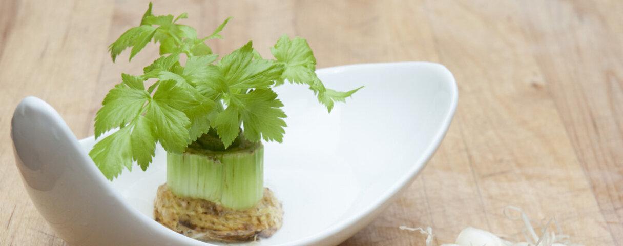 Selbstgezogenes Gemüse auf einem Teller.