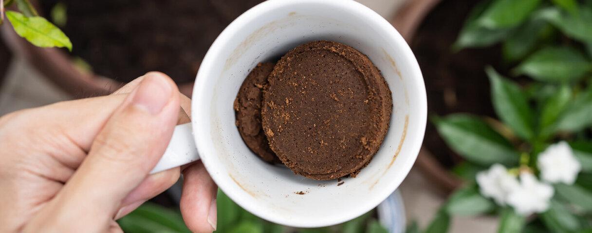 Jemand hält eine Tasse mit Kaffeesatz als Dünger für den Garten bereit, so funktioniert Recycling