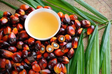 Die Früchte der Palmpflanze und Palmöl in einer Schale liegen auf einem Tisch.