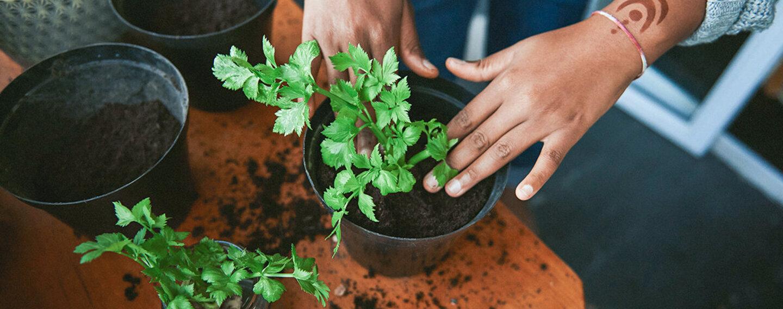 Frau beim Gemüse anbauen im eigenen Zuhause.
