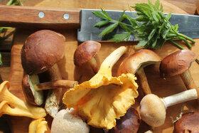 Pilze und ein Messer liegen auf einem Schneidebrett.
