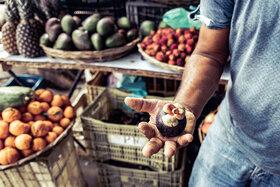 Ein Mann an einem Marktstand hält eine geschlossene Mangostan in der Hand.