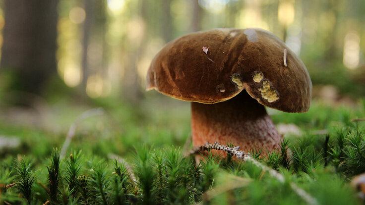 Pilz an einer Waldlichtung