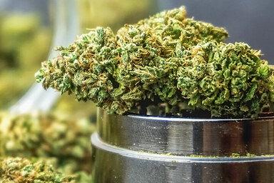 Eine Marihuanaknolle liegt auf einem Grinder – der Cannabiskonsum wächst stetig.