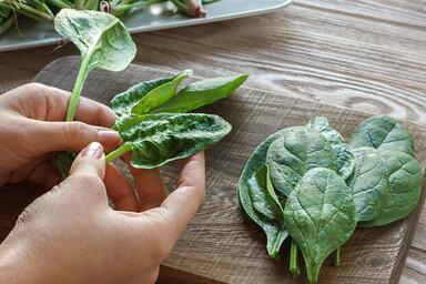 Frisch geernteter Spinat schmeckt toll in Frühlings-Rezepten.