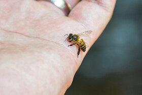 Eine Biene krabbelt über die Handfläche.